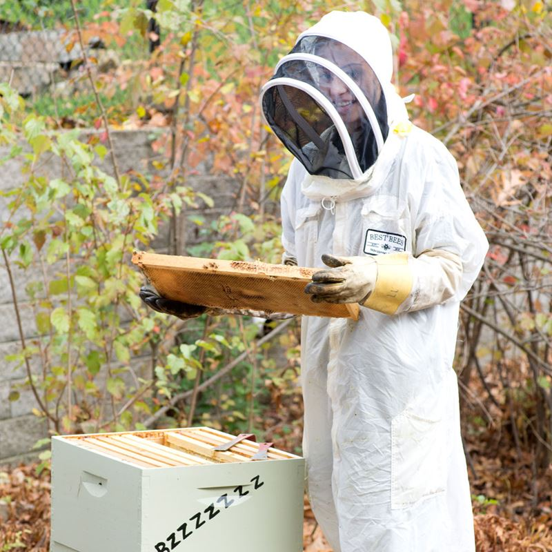 Student harvesting local bee hive with Best Bees Company