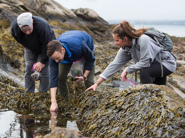 Three Endicott environmental science students exploring tide pools at one of Endicott beaches